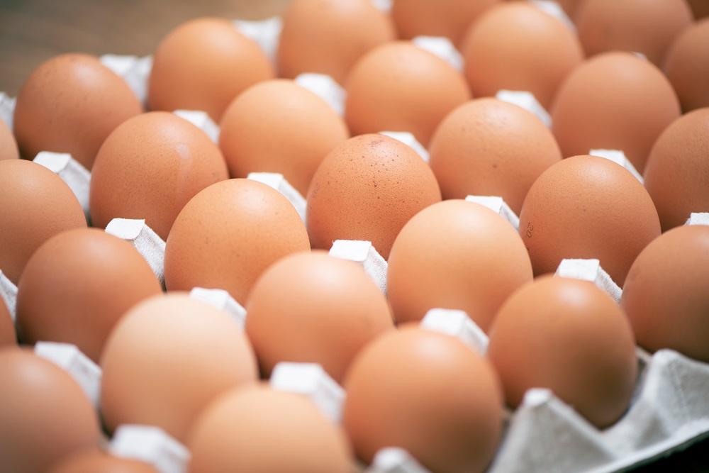 オレンジエッグで使用している卵